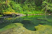 Quiet pool in the Englishman River <br /> Englishman River Falls Provincial Park<br /> British Columbia<br /> Canada