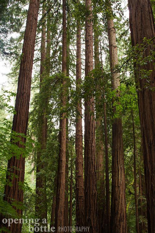 Muir Woods National Monument, Marin County, California