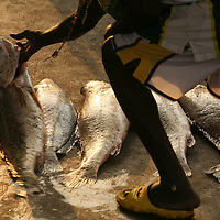 Market and fishermen in Conakry , Guinea , West Africa.