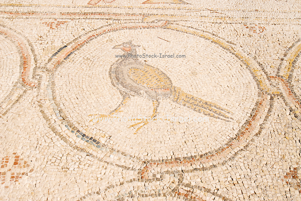The Palace of the 'Bird Mosaic' a 14.5 x 16m floor of a villa dating to the Byzantine period, 6-7th century CE. Caesarea, Israel Peacock detail