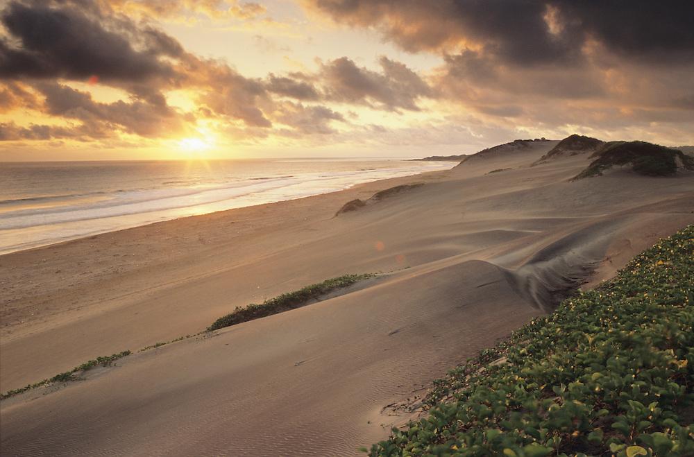 Fiji Sigatoka Sand Dunes