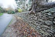 Dry stone walling at Hameau d'Auvringhen in Wimille, Parc Naturel Régional des Caps et Marais d'Opale, Pas-de-Calais, France © Rudolf Abraham
