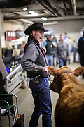 SHOT 1/11/20 3:39:21 PM - A cowboy leads a steer through the National Western Stock Show complex. The National Western has been held annually every January at the National Western Complex in Denver, Colorado since 1906. Its purpose is to demonstrate better breeding and feeding techniques to attendees. Since first held in 1906, it has become the world's largest stock show by number of animals and offers the world's only carload and pen cattle show. (Photo by Marc Piscotty / © 2019)