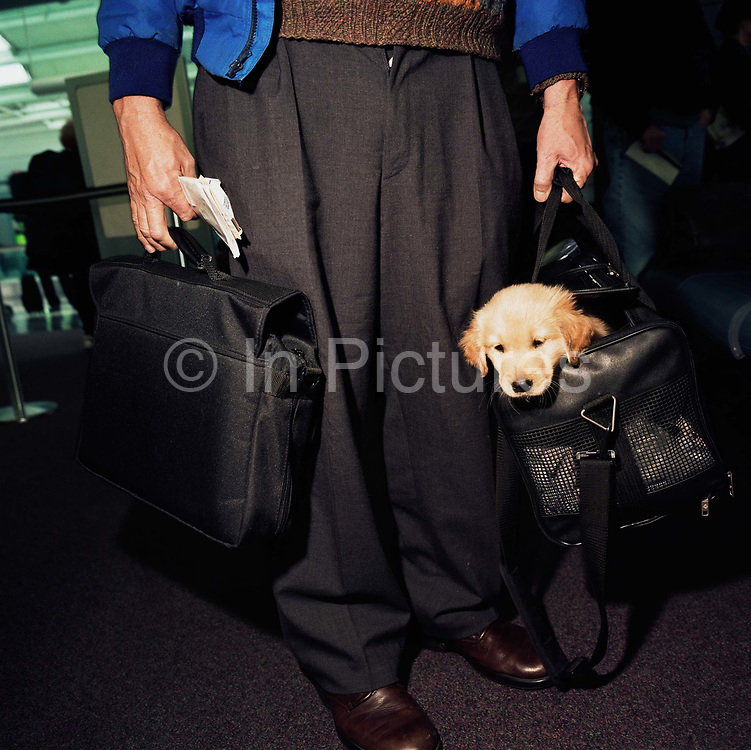 We see a male passenger from the waste down with a laptop computer in one hand and a Retriever puppy peering out from his owner's bag in the other, both human and pet are about to board a domestic flight from Chicago O'Hare airport. According to the American Transport Security Administration, taking pets into the aircraft cabin is permissable but the animal is required to be presented to the Security Officers at the checkpoint. it may also walk with its owner through the metal detector but not through the x-ray scanner. Picture from the 'Plane Pictures' project, a celebration of aviation aesthetics and flying culture, 100 years after the Wright brothers first 12 seconds/120 feet powered flight at Kitty Hawk,1903.