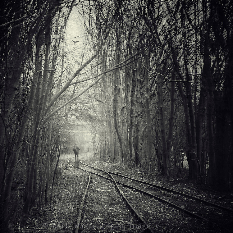 abandoned railway framed with densely growing trees