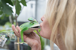 Woman kissing a metal frog in garden centre, Augsburg, Bavaria, Germany