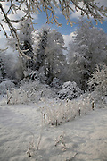 White winter snow countryside landscape