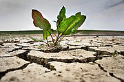 Nederland, Nijmegen, 2-5-2020 Bijna drooggevallen  zijgeul van de Waal . Door de lage waterstand, laagwater,en de langdurige droogte is er geen aanvoer van water vanuit de rivier. Door het uitblijven van regen de afgelopen weken is de geul bijna leeg en opgedroogd . De Waal is het Nederlandse deel van de Rijn en de belangrijkste vaarroute van en naar Rotterdam en Duitsland .Foto: Flip Franssen