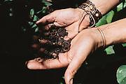 """Alvaro, coltivatore, del Club di coltivazione Manga Rosa Social Club, mostra il concime naturale utilizzato per la sua coltivazione. <br /> """"Le piante vendute dallo Stato saranno coltivate da aziende scelte attraverso una vera e propria gara d'appalto. Aziende come il nostro club. Parteciperanno imprese estere e uruguayane, su ventidue candidate alla fine dell'anno ne rimarranno solo cinque. <br /> A Mujica contesto il fatto che ci tratti come malati o tossicodipendenti, perché non esiste la dipendenza da marijuana. Ma questa è una posizione generazionalmente conservatrice. La legge più forte dell'universo è l'inerzia...agire per mantenere tutto come è"""". Montevideo, 17 dicembre 2015.  Christian Mantuano / OneShot"""
