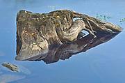 Tree stump in Prudhomme Lake , Prudhomme Lake Provincial Park, British Columbia, Canada
