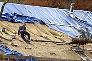 Nederland, Ubbergen, 26-11-2013Rietdekkers bezig met het vernieuwen van een rieten dak van een gtoot huis.Foto: Flip Franssen/Hollandse Hoogte