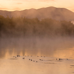 Early morning on a misty morning on the Connecticut River in Lunenburg, Vermont. Canada geese.