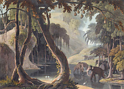 A Scene in Sitsikamma hand colored plate from the collection of  ' African scenery and animals ' by Daniell, Samuel, 1775-1811 and Daniell, William, 1769-1837 published 1804