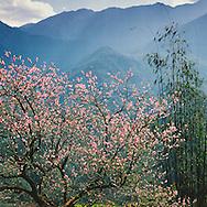VietNam Images-landscape-Nature-Sapa Hoàng thế Nhiệm Phong cảnh Sapa