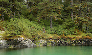 Shoreline of temperate rainforest, AK