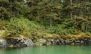 Shoreline of temperate rainforest, AK