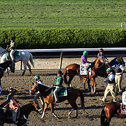Horses prepare to enter the starting gate during the 146th Running of the Belmont Stakes, Belmont  Park, Elmont. New York.  USA. 7th June 2014. Photo Tim Clayton