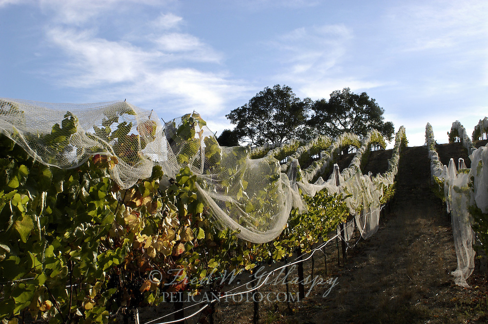 Santa Cruz Mountains - Western Slopes - Windy Oaks