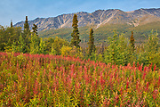 Kluane Ranges, the easternmost of the St Elias Mountains. <br />