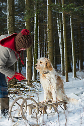 Mature woman talking to a dog sitting on sled, Bavaria, Germany
