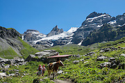 Above the beautiful lake of Oeschinnensee, easily reached by lift from Kandersteg, is a challenging hike traversing steeply up over Hohtürli Pass then down to Griesalp in the remote valley of Kiental, Switzerland, Europe. Ascend 1120 meters and descend 1380 m in 13 km, which feels much longer due to steep, exposed rocky & gravelly slopes. Stairs and ladders assist your footing. Optionally stay overnight in Blüemlisalp hut at Hohtürli Pass.