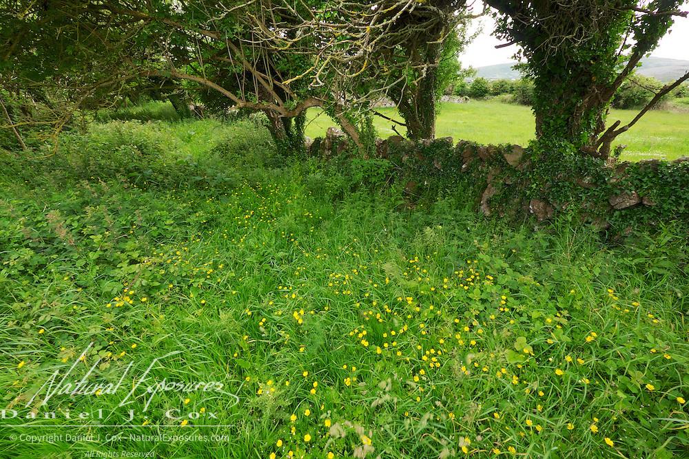 Hedge rows, Ireland.