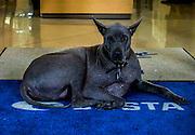 Blue Dog, New Orleans, LA
