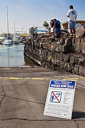government officials and locals keeping eyes on Hawaiian monk seal, Monachus schauinslandi, basking at boat ramp, young male, critically endangered, Honokohau Harbor, Kona Coast, Big Island, Hawaii, Pacific Ocean, No MR
