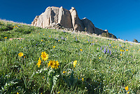 The slopes of Steamboat Point are beautiful this time of year with lots of blooming lupine and arrowleaf balsamroot wildflowers.