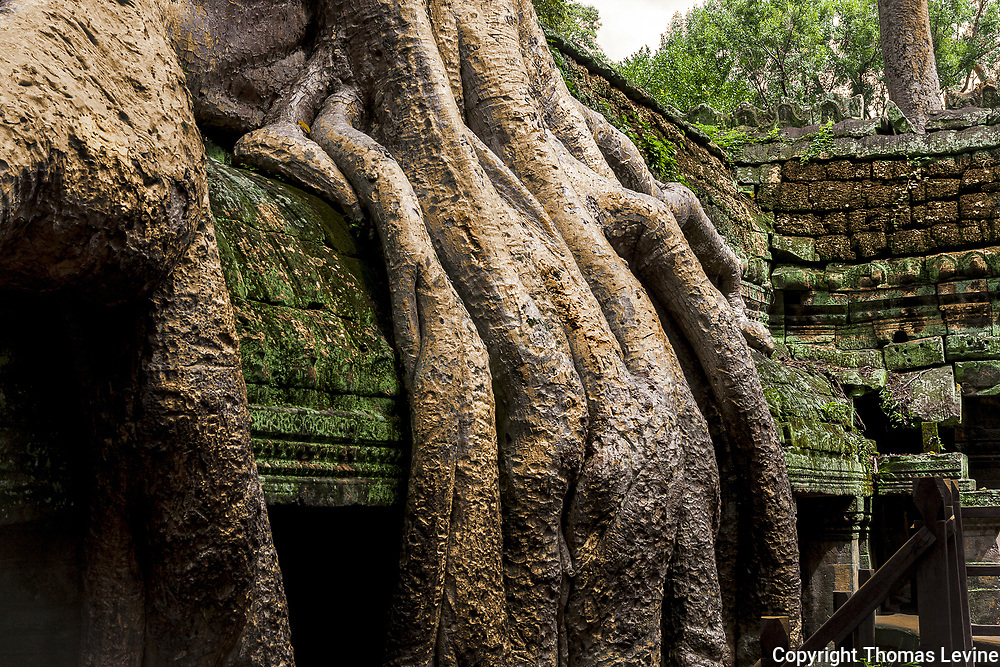 Nature and Manmade merge in Cambodia.