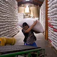 A worker carries a sack of coffee in the Molinos warehouse in San Pedro Sula.