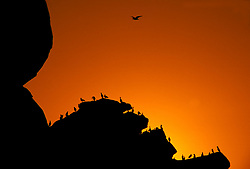 Sunset, Morro Rock, Sea Birds, Morro Bay, California