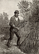 Charcoal burners in the Lake District, north west England, known locally as colliers. Man stacking sticks of wood and building a pile or clamp which would be covered with turf and slowly burned to produce charcoal.  From November to April the men cut and hauled wood. In April and May they peeled bark off the oak wood they had cut and this would be used for tanning leather. In summer they made charcoal, living in or near the woods in teams of about 12 so that there would be someone to tend burning clamps at all times. Engraving from 'The English Illustrated Magazine' (London, 1884).