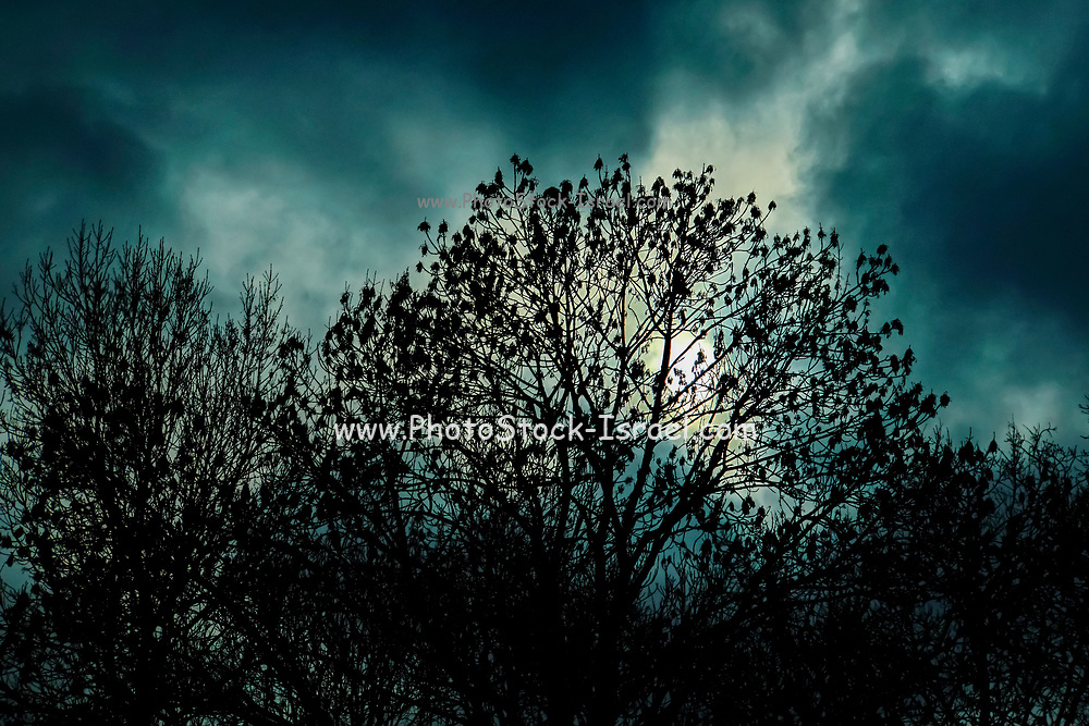 nightmarish forest scene