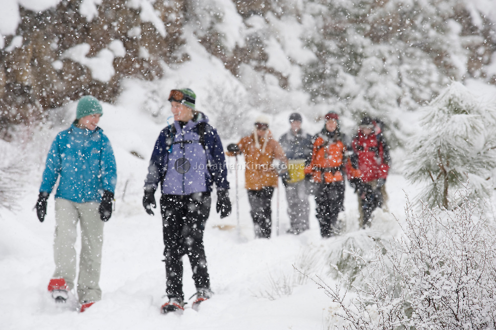 Front view of a medium sized group of adults walking on a trail in the snow in Bend, Oregon. (releasecode: jk_mr1037, jk_mr1034, jk_mr1035, jk_mr1036, jk_mr1032, jk_mr1033, jk_mr1031) (Model Released)