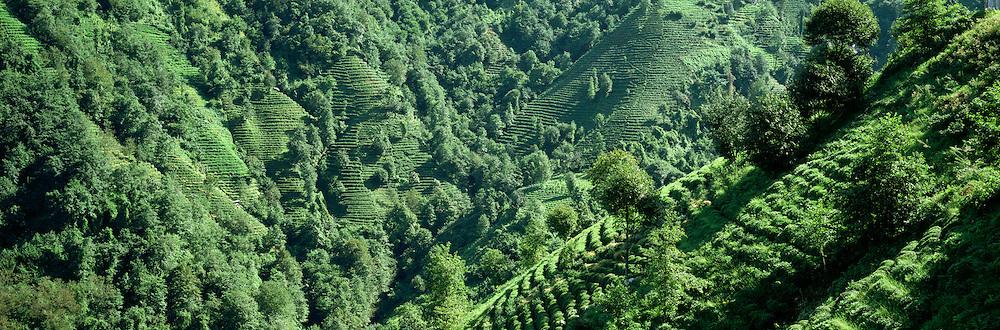 TURKEY, AGRICULTURE Tea plantations on steep terraced field along the coast of the Black Sea near Rize; Turkey's main tea producing area