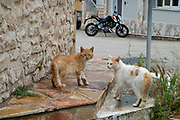Feral cats in Vathy, Ithaca, Greece. Ithaca, Ithaki or Ithaka is a Greek island located in the Ionian Sea to the west of continental Greece. Ithacas main island has an area of 96 square kilometres. It is the second-smallest of seven main Ionian Islands. Greece and the Greek islands are inundated with stray, abandoned and feral cats. The majority of them are born in the spring and survive through the kindness of people who feed them.