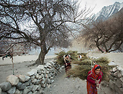 Women returning from getting wood (for cooking and heating) and hay (for animals) in Zor Abad, a winter pasture two hour walk from Hunssaini village, across the Hunza valley riverbed. Gojal region.