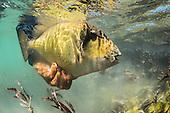 Triggerfish Stock Photos