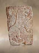 Hittite relief sculpted orthostat panel of a lion from Tell Halaf, ancient Guzana, Syria, iX cent BC, Louvre Museum. Cat no 19804