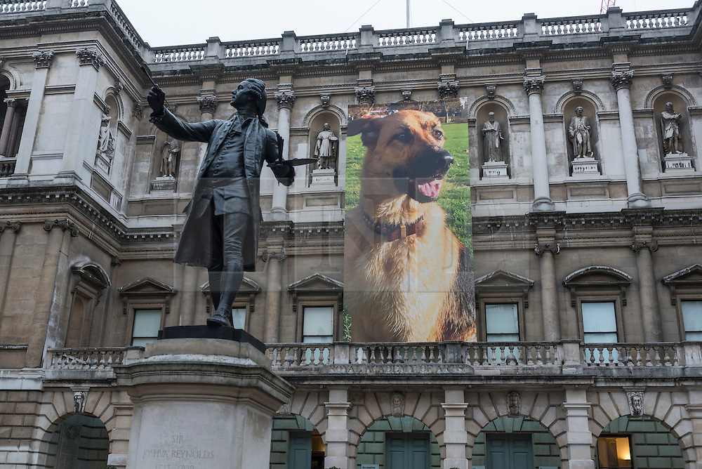 "© Licensed to London News Pictures. 26/01/2017. London, UK. ""German Shepherd for Burlington House"", an 11m banner, by Gina Fischli is on display at ""Premiums Interim Projects"", an exhibition of new work by 13 second year students at the Royal Academy, Piccadilly, who are at the interim point of their postgraduate study at RA Schools, the UK's longest established art school. Photo credit : Stephen Chung/LNP"