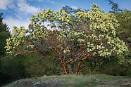 Heath Family (Ericaceae)