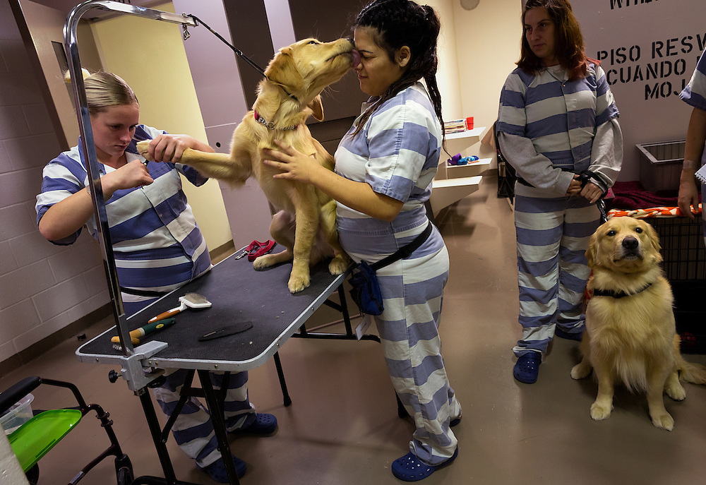 David Albers/Staff<br /> The Collier County Jail's inmate rehabilitation program, including cell dogs and Seven Habits of a Highly Effective Person