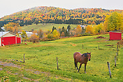 Horse, farmland and Acadian forest in autumn foliage. Near Edmunston. Madawaska County, Rolling hills. <br />Saint-Jacques<br />New Brunswick<br />Canada