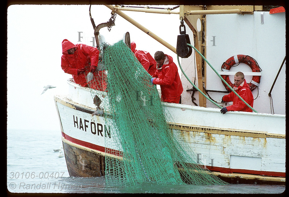 Fishermen wrestle fishing net aboard stern of gillnet boat on a July day in Faxafloi Bay. Iceland