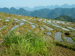 Asia, Vietnam, Pu Luong Nature Reserve, terraced rice paddies