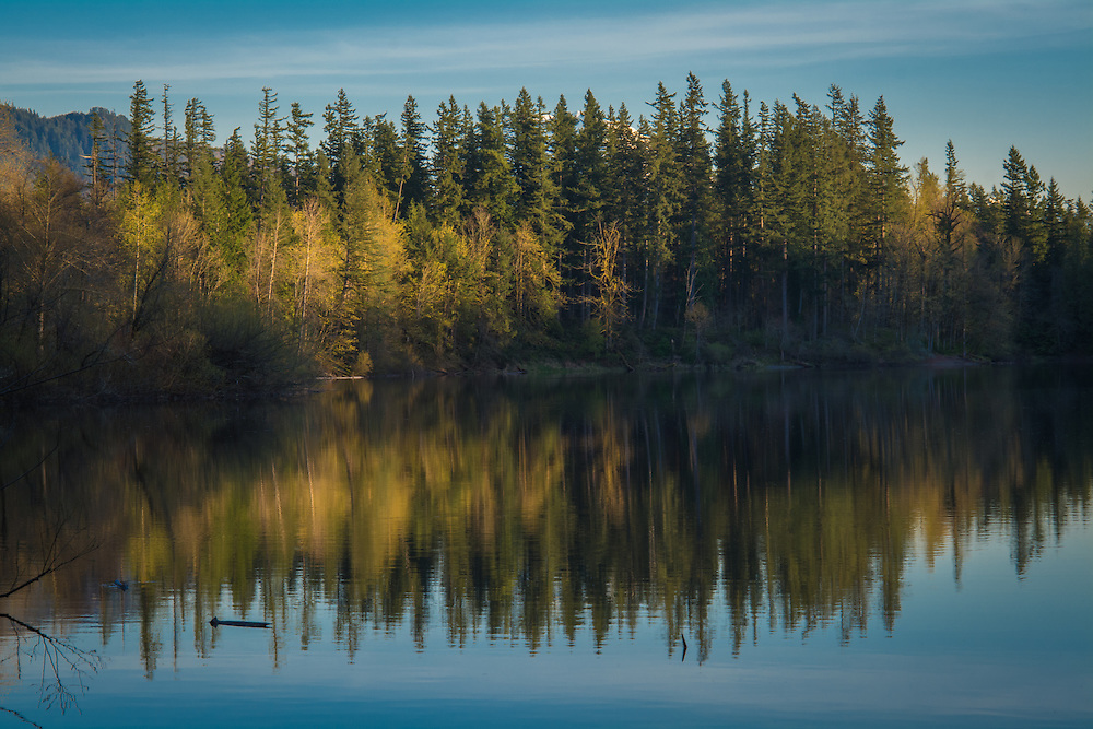 Deep Lake near the Green River Gorge is about 40 miles southeast of Seattle, Washington is particularly beautiful in the late afternoon. It also happens to be an amazing place for biodiversity. The woods around this lake are filled with all kinds of birds, especially during migration, and the astounding variety of wildflowers changes every time you visit. This image was taken during a rare early spring day when it wasn't raining.