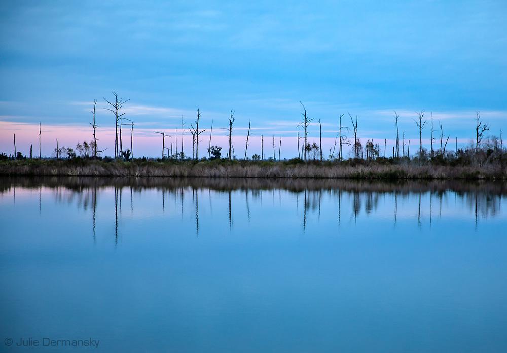 Dead trees near the Isle de Jean Charles in Terrebonne Parish, Louisana.