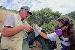Judd Howell & Kerry Fitzharris Processing Captured Mice & Voles