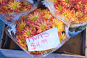 Fresh mums for sale at a Seattle Farmers Market. Missoula Photographer
